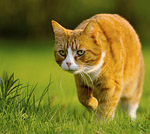 cats_hunting