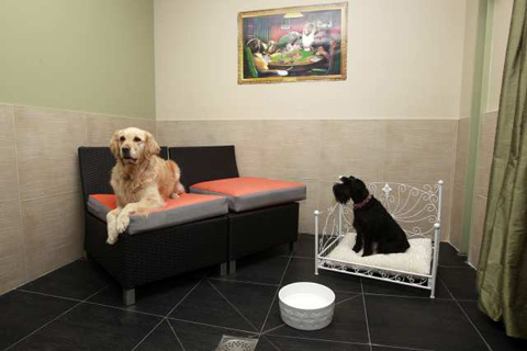 Guests Cleo and Belle are seen in a room in the Actuel Dogs Hotel in Vincennes near Paris