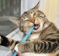 cats-brushing-teeth-01